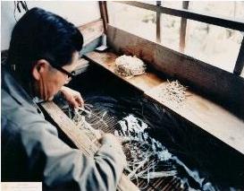 Čišćenje floema