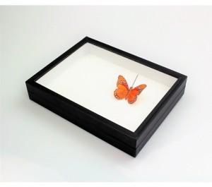 entomološka kutija - 1p