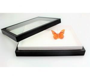 entomološka kutija - 2p