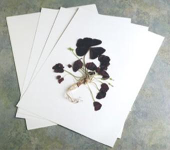 Specijalni papiri - Papiri za herbarij, pergamin papir, retro papiri za umetanje u foto albume …